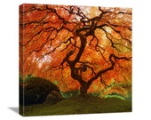 "Fall Nature Photography ""Autumn Zen"" Red Orange Japanese Maple Tree Photo, Landscape Art, Fall Color, Asian Wall Decor, Canvas Gallery Wrap"
