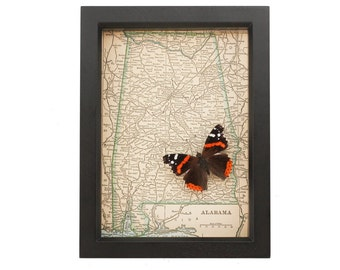 Framed Map of Alabama with native butterfly display
