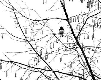 Snowing Again 2 - A Dark eyed Junco Enjoying Snow Winter snow Winter decoration First snow Snow white White snow Snowy Fine Art Print 8x8