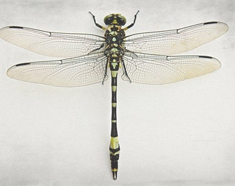 Dragonfly - dragonfly wings I can fly high spring insect nature marco wildlife dark green insect art for boy girl photography wall fine art