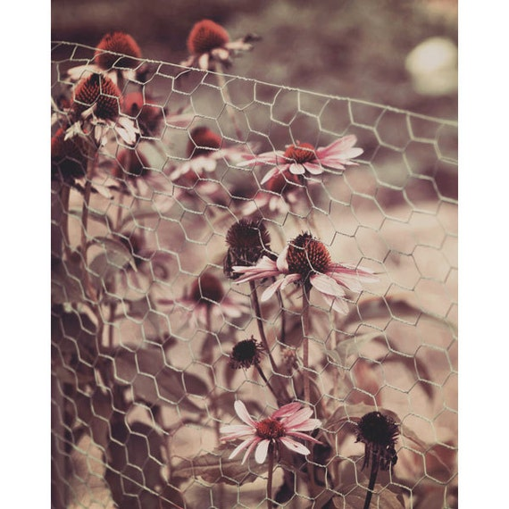 Wildflower Photograph, Nature Photography, Sunset,  Retro Wild Flowers, Garden, Fence, Wall Art, 70s, Country, Rustic,Home Decor