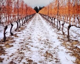 vineyard photo, wine photo, orange white, snow, wine, winery, home decor, landscape winter, ontario, niagara, wall art, rustic cottage decor