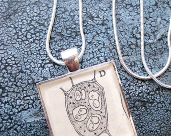 Wood Cell Vintage BotanyText Book Illustration Square Resin Silver Plated Pendant with silver Chain