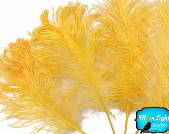 Ostrich Feathers, 10 Pieces - GOLDEN YELLOW Ostrich Tail Feathers : 3747