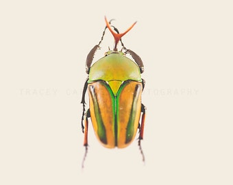 Beetle Photograph, orange, green, nature wall art print, rustic, minimalist, boys room decor, playroom art, garden decor, color photograph
