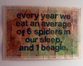 6 spiders, 1 beagle