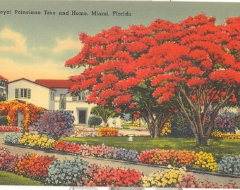 Vintage Florida Postcard Naples On The Gulf By