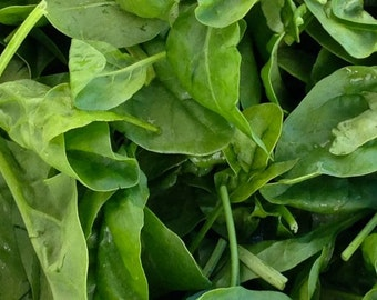 Spinach, Japanese Green Spinach Seeds | Lush Rich Green Spinach Leaves Extremely Heat Tolerant