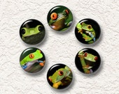 "Set Of 6 Frog Magnets, Refrigerator Magnets, Nature Magnets 1.25"" Buy 3 Sets Get 1 Set Free 6-016M"