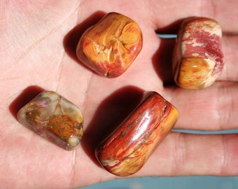 Petrified Wood Tumbled Stone Large Size