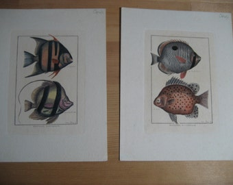beautiful Italian hand colored vintage engravings of exotic fish