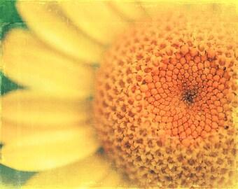 clearance sale, sunflower print, sunflower photograph, flower photography, nature print, yellow nursery decor, girls room print, 5x7 art