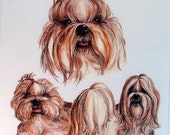 Shih Tzu Dog with Bow on Womans T Shirt Dog Print Free Shipping to USA 5714