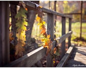 Autumn Leaf Garland, Autumn Leaves in the sun, Earth Art, Land Art fine art photography