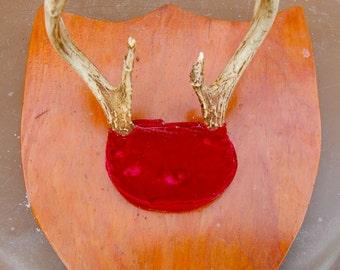 Vintage Northwoods deer trophy taxidermied antler mount 1973. Nice folky home made look.