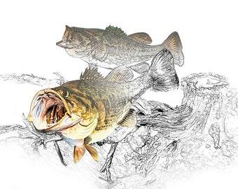 Largemouth Black Bass Fish feeding by a Tree Stump No.07243 A Fine Art Graphic Fishing Angling Nature Photographic Image