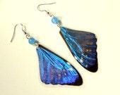 Blue Butterfly Earrings, Real Butterfly Wing Earrings, Blue Morpho Butterfly