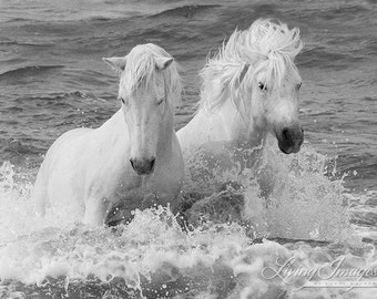 Two White Horses in the Waves - Fine Art Horse Photograph - Horse - Ocean - Black and White - Camargue - Fine Art Print