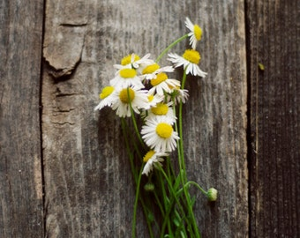 Rustic flower art, floral nursery art, botanical art, floral still life, farmhouse decor,rustic spring decor,romantic floral art,girly decor