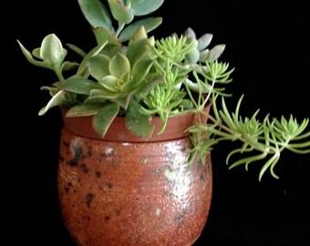 succulent planter, pot succulent, cacti planter chawan pot