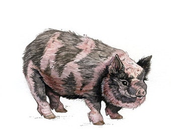 Pig | Watercolor | Archival Print