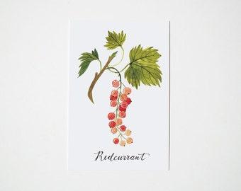 Redcurrant postcard