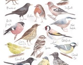 British Garden Birds Watercolor Painting Illustration Print 8 x 10 Print Giclee Aquarelle Rag