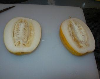 15 Amazon Tribe Melon Seeds-1324