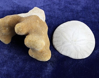 Sand Dollar & Coral- FREE Shipping in USA - Rustic/Natural Coral Reef and Whole Sand Dollar from Pacific Ocean, Oregon Coast, Portland 184