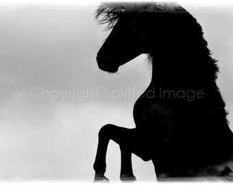 TEMPEST, SPANISH STALLION,  Edition Print, Wall Decor, Equine art, Horse Photography, Black & White photo