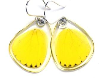 Real Grass Yellow Butterfly (Eurema hecabe brenda) (bottom/rear wings) earrings