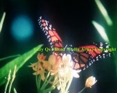 Butterfly Art, Instant Download, Pay/Print/Frame/Canvas Art, Filtered Soft Butterfly, Orange Black Monarch, Monarch Buttefly, Spring Art