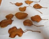 10 Natural Seed Pods, Light Brown Flat Oval Jacaranda Tree Seed Pods Floral Arts and Crafts Supplies
