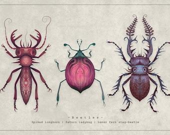 Beetles - A4 Art print