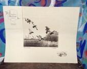 Vintage duck lithograph