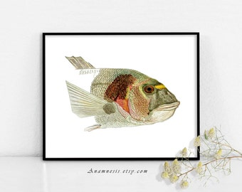 FISH PORTRAIT - digital download - printable 1800's illustration retooled by Anamnesis - image transfer - totes, pillows, prints, clothes