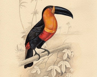 Natural History Art, Toucan art print from a watercolor painting by Irene Owens