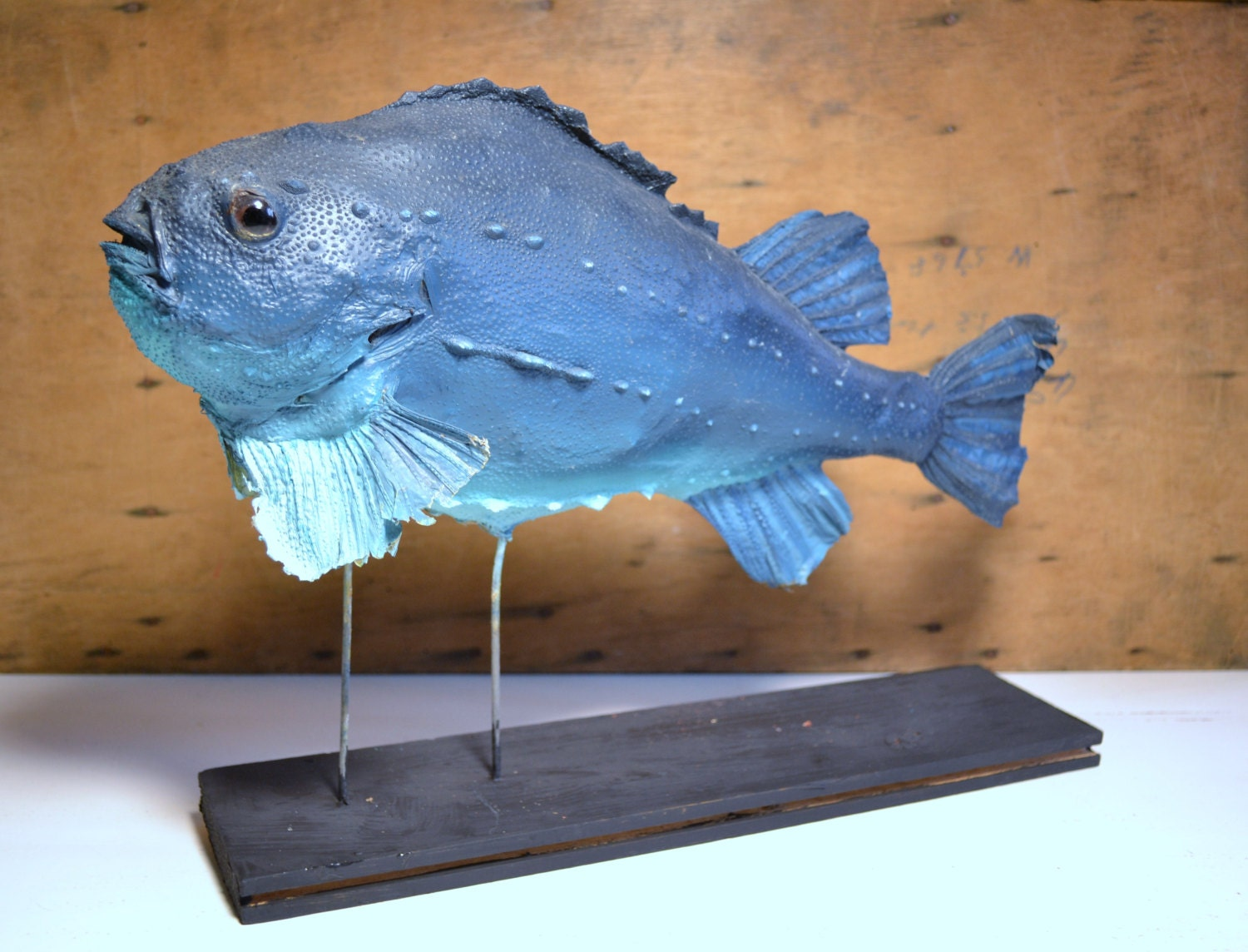 Vintage Taxidermy Big Blue Fish Mounted Fish By