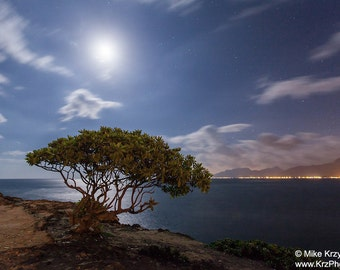 Tree at Water's Edge Under a Full Moon at Night, Laie Point, Oahu, Hawaii
