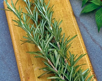 Rosemary Heirloom Medicinal Herb Seeds  Non GMO