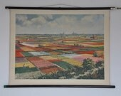 Rare Authentic Mid Century Botany Print. Tulip field.  Holland.  Spring.  Pull Down School Chart. Germany. Pull down chart map School