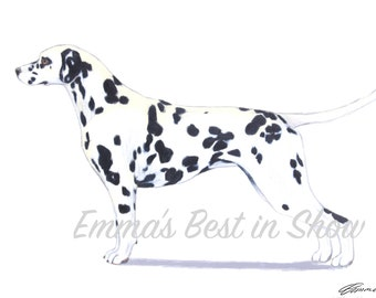 Dalmatian Dog - Archival Fine Art Print - AKC Best in Show Champion - Breed Standard - Non-Sporting Group - Original Art Print