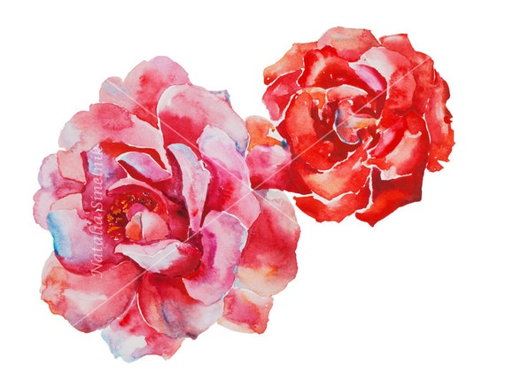 Pink roses head digital download from original watercolor in pink and scarlet colors, cottage chic style painting clip art