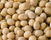 SoyBean 200 seeds Natural and Healthy Soy Bean Vegetable Edamame Non GMO delicious raw in salads or cooked Plump, deep green pods
