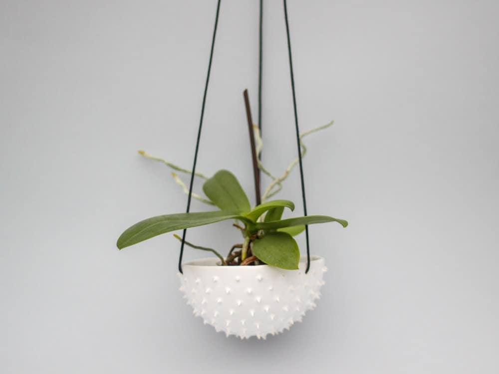 ceramic spiky white hanging planter air planter succulent