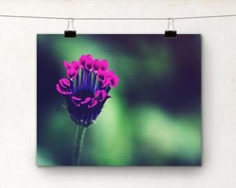 Violet Fleur, Fine Art Photography, Purple Flower Macro Petals