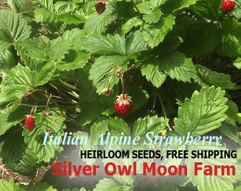 Italian Alpine Strawberry seeds -  Heirloom Perennial Wild Strawberry