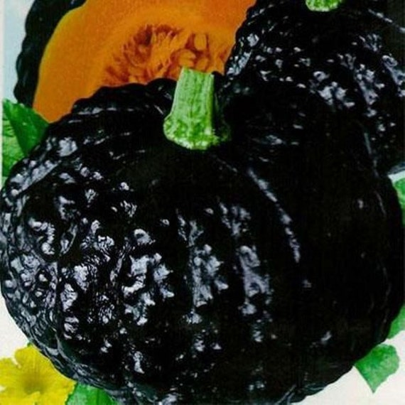 Japanese Black Pumpkin - Kabocha Seeds