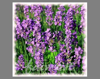 """Photo """"Lavender"""" 13x13 cm with mini easel"""