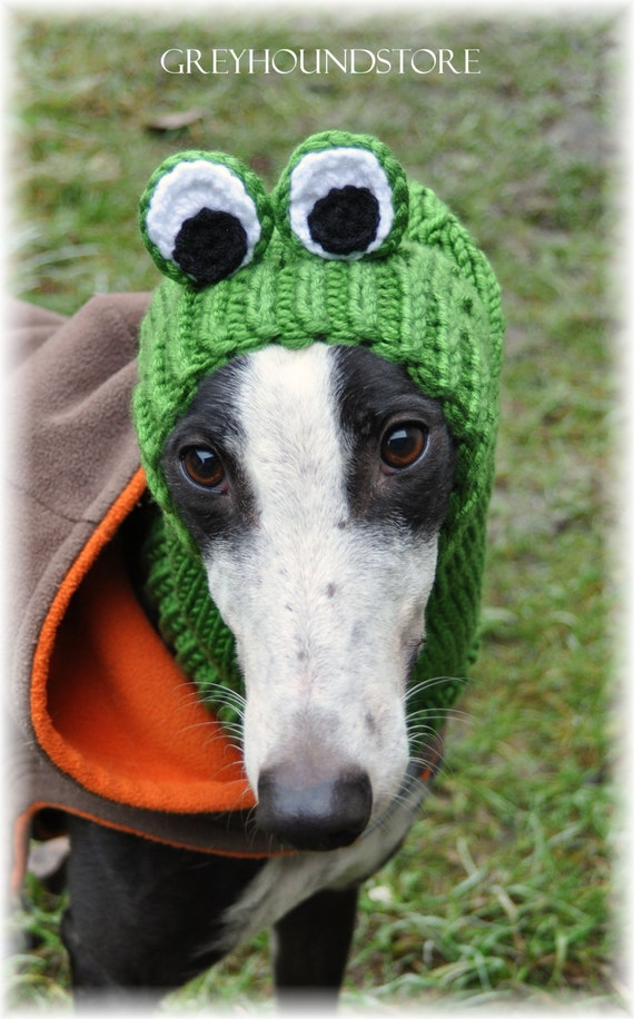 FROG HAT for greyhound/galgo/lurcher